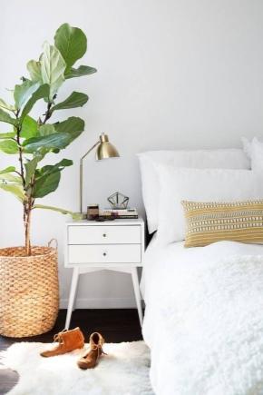Czy W Sypialni Można Przechowywać Rośliny Domowe